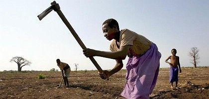 Farmers working a field in Malawi.