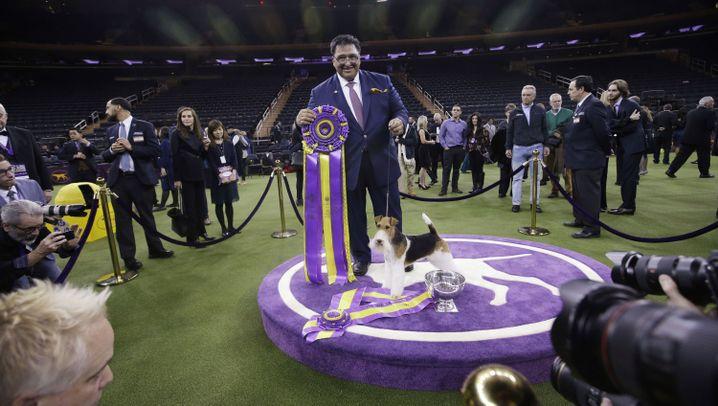 Hundeshow in New York: Es kann nur einen König geben