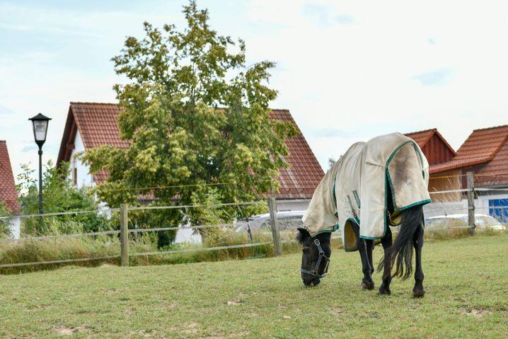 Gegenüber der Haustür der Familie Steimer liegt eine Pferdekoppel
