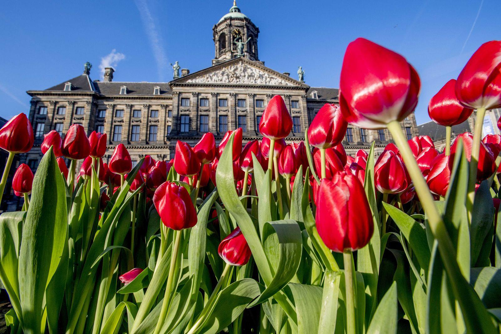 Free tulips in Amsterdam, Netherlands - 21 Jan 2017