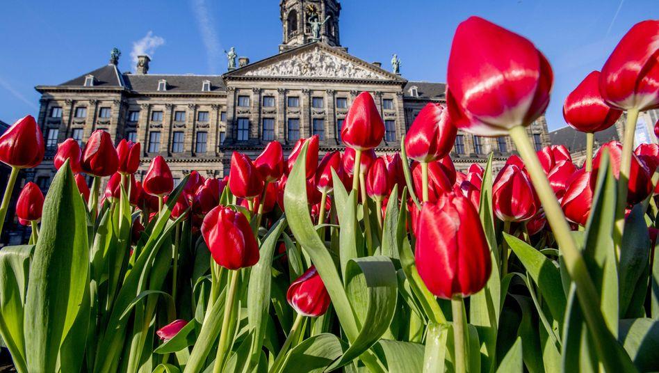 Rote Tulpen auf dem Dam Square in Amsterdam