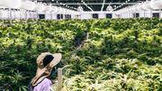 Die deutsch-israelische Cannabis-Connection