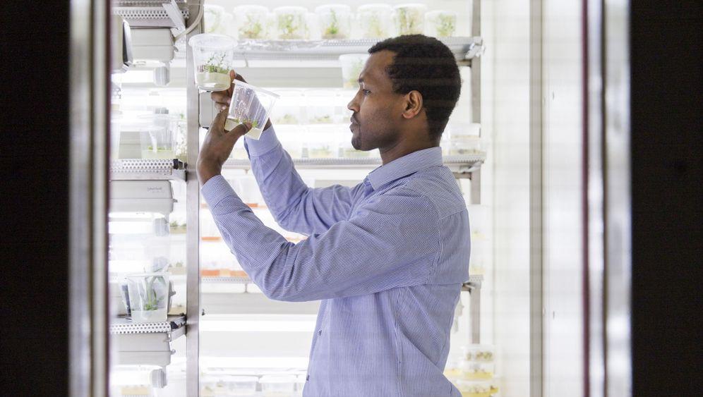 Gen-Forschung: Insektengift, das aus der Erbse kommt