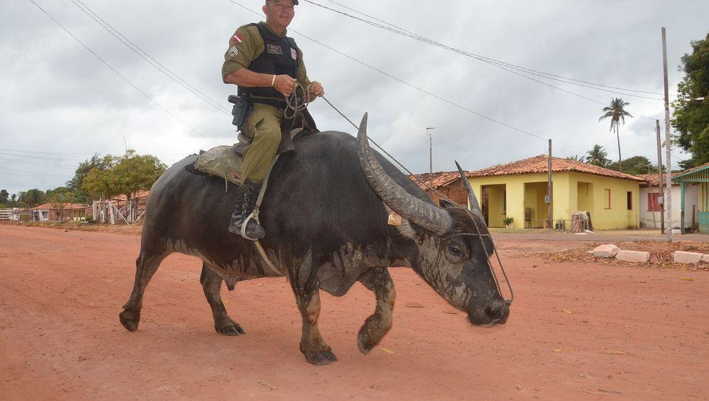 Polizei in Brasilien: Auf Streife mit einem Wasserbüffel