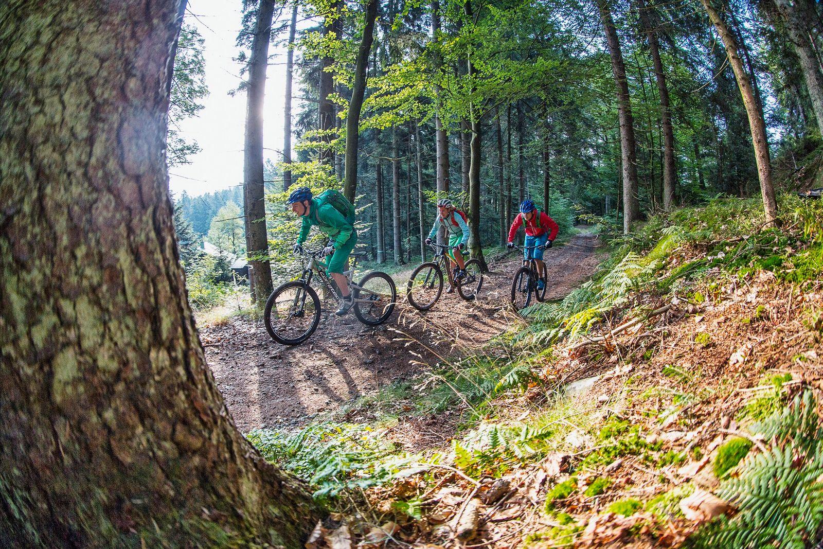 Trans Bayerwald - Mountainbiken in Deggendorf_© Tourismusverban