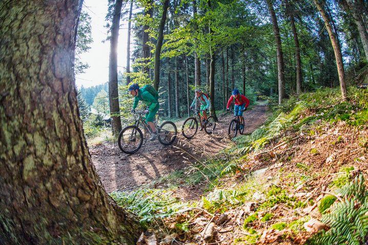 Mountainbike-Strecke bei Deggendorf: Schwitzpartie in zwei Teilen