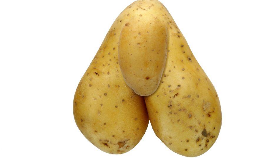Erst wenn ein Penis im erigierten Zustand weniger als sieben Zentimeter misst, sprechen Mediziner von einem Mikropenis