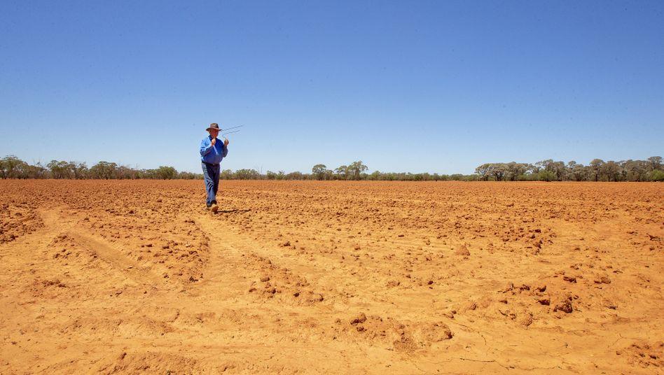 Fragwürdige Methode: Ein Farmer in Cobar geht mit einer Wünschelrute über sein Land, um Wasser aufzuspüren
