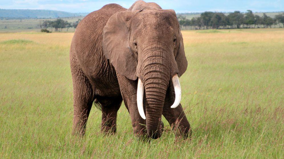 Kenia: Prinzentaugliche Safari-Abenteuer