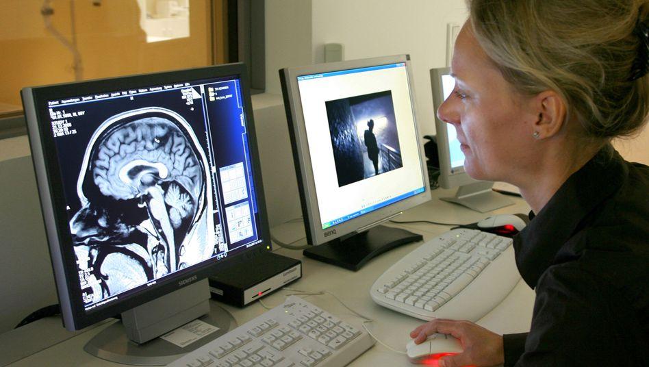 MRT-Bild des Gehirns: Areale für Gesichter- und Stimmenerkennung sind verknüpft