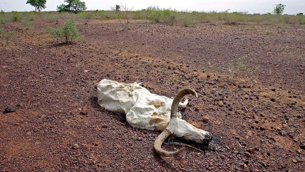 Sahelzone: Die Begrünung der Wüste