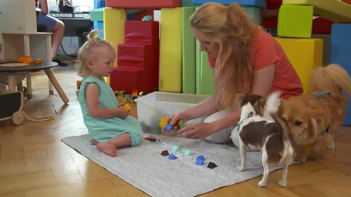 TV/ Train Your Baby Like a Dog - Die Hund-Kind-Methode