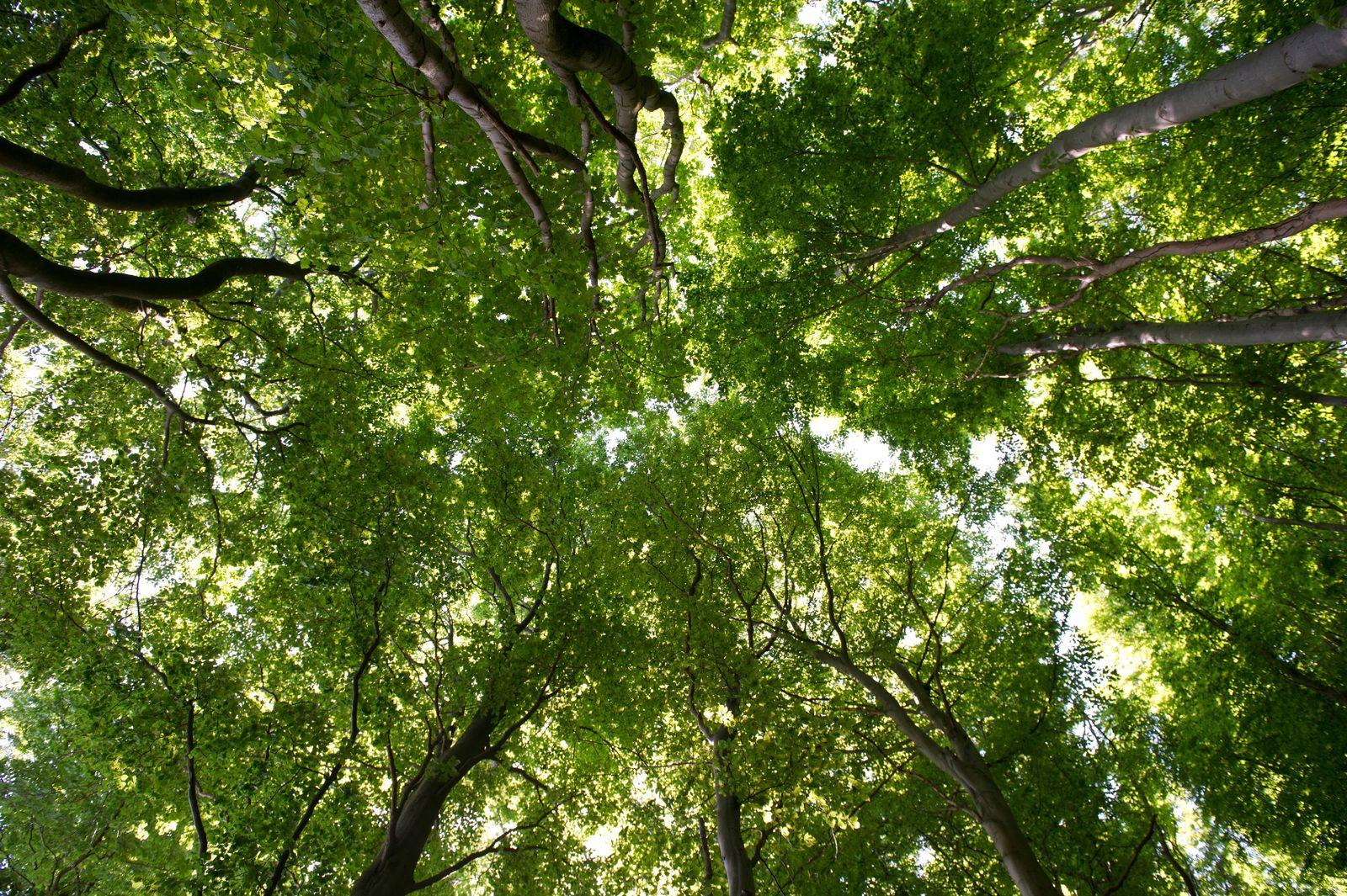 Wald-Inventur / Bäume