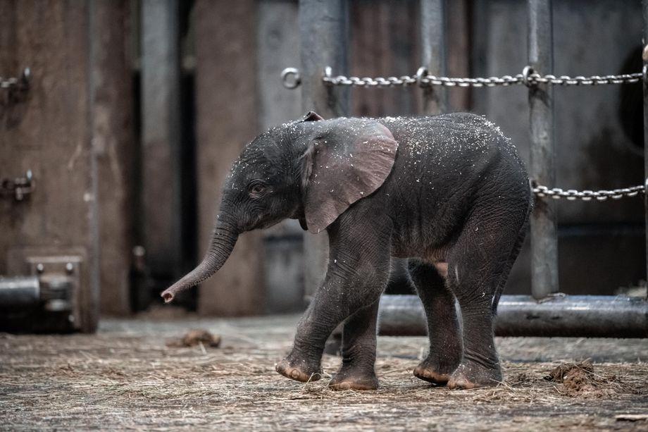 Wuppertaler Zoo Elefantenbaby
