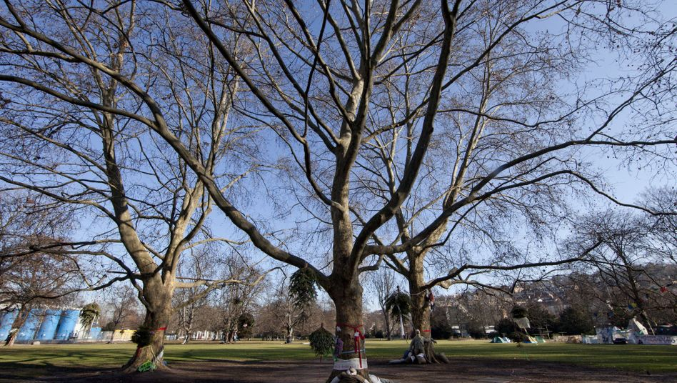 Bäume im Schlossgarten: Fällgenehmigung vom Eisenbahn-Bundesamt