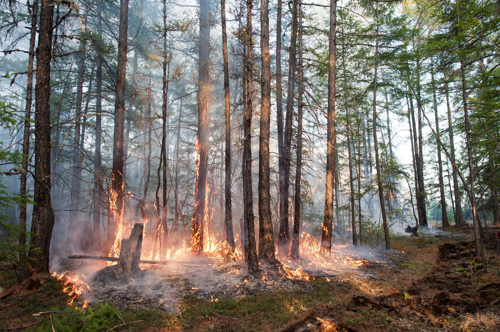 YAKUTIA, RUSSIA - JUNE 2, 2020: A forest fire in central Yakutia (Sakha Republic). Yevgeny Sofroneyev/TASS PUBLICATIONxI