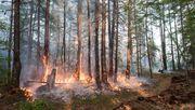 Warum jetzt sogar Wälder den Klimawandel anheizen könnten