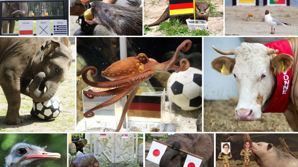 Animal owners across Germany are trying to repeat the success of Paul the Octopus (center) by becoming the next football oracle. Germany's animal protection agency is not pleased.