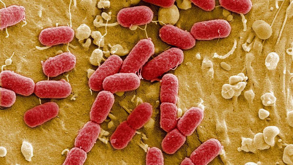 Ehec-Bakterienkolonie: Seuche forderte 40 Todesopfer