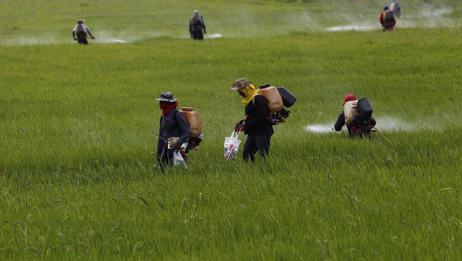 Reisbauern in Thailand: Geringe Erträge und hohe Preise drohen Krise zu verschärfen