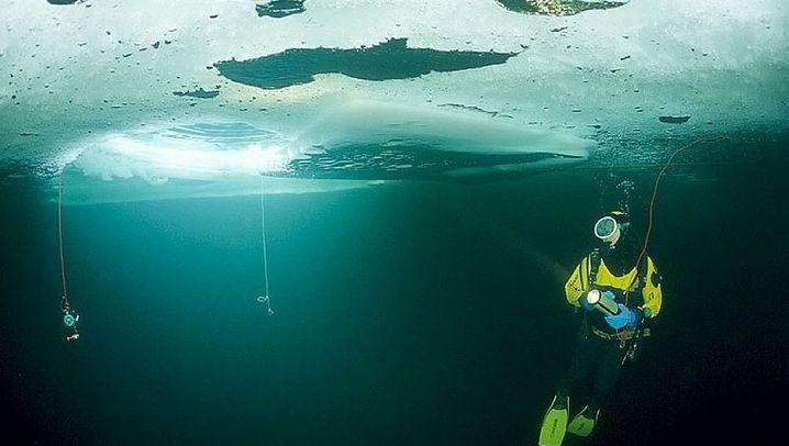 Unter dem Eis: Wie in einer anderen Welt