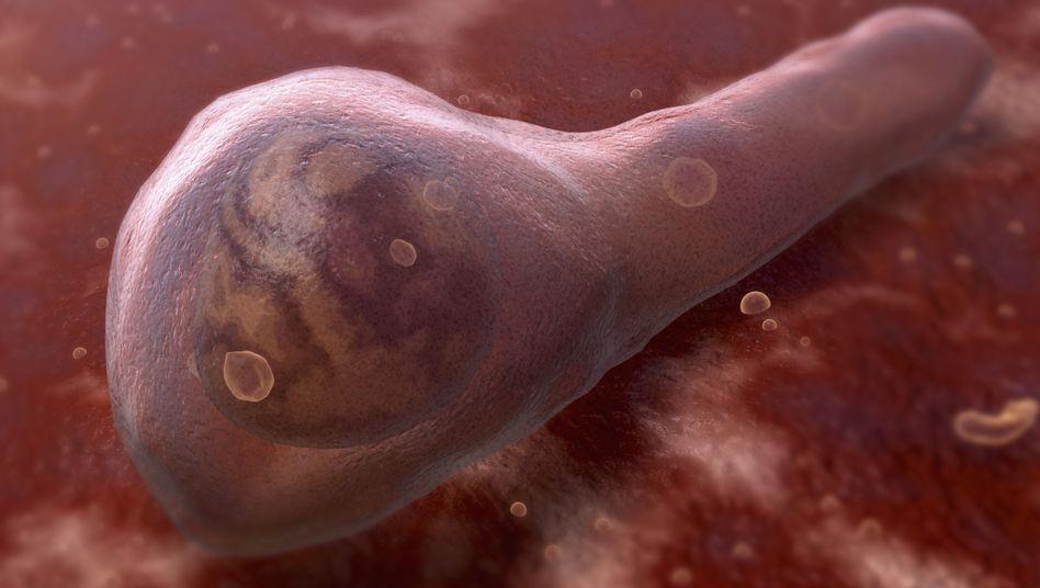 Gefährliches Bakterium: Tödliche Krämpfe durch Clostridium tetani