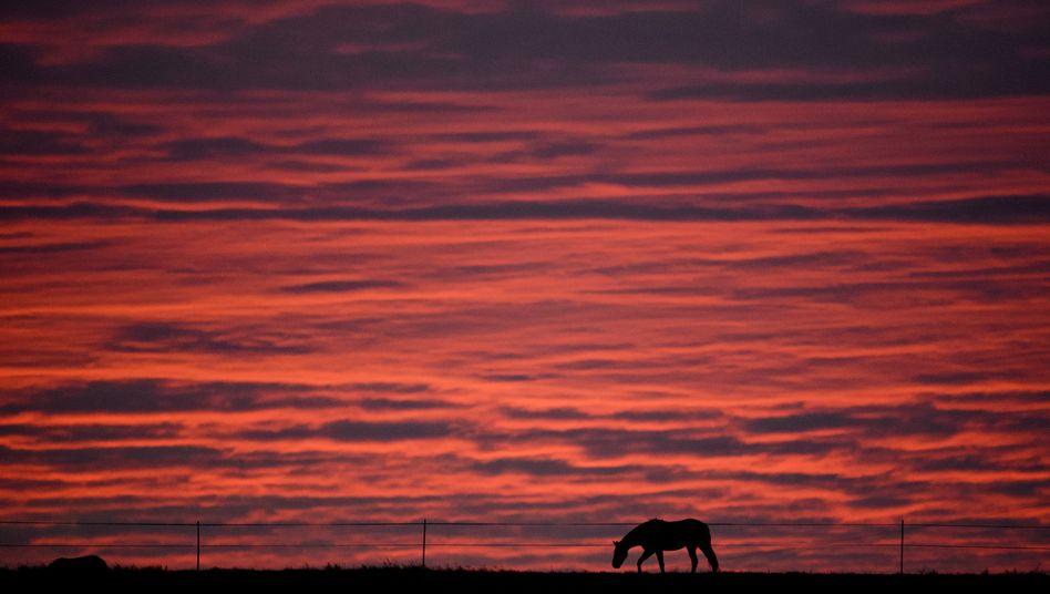 Pferd auf einer Wiese in Niedersachsen