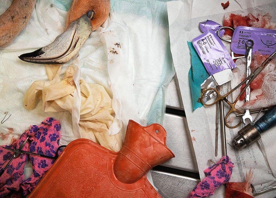 In Odettes Praxis werden oft verletzte Flamingos behandelt, etwa weil sie von einem streunenden Hund gebissen wurden.