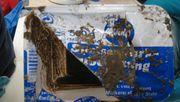 Forscher finden gut erhaltene Quarkpackung in der Tiefsee
