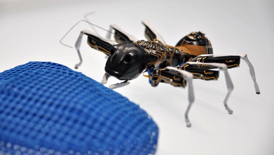 Autonome Ameise: Bestens vernetzte Kleinroboter