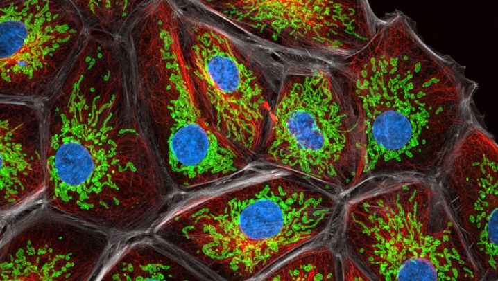 Sted-Mikroskopie: Scharfer Blick in die Nanowelt