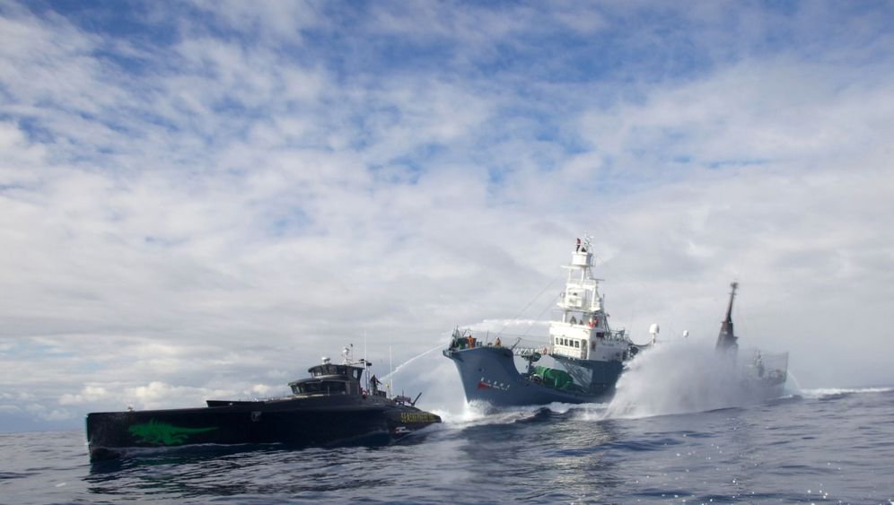 "Sea Shepherd: Operation ""No Compromise"" beendet japanische Walfangsaison"