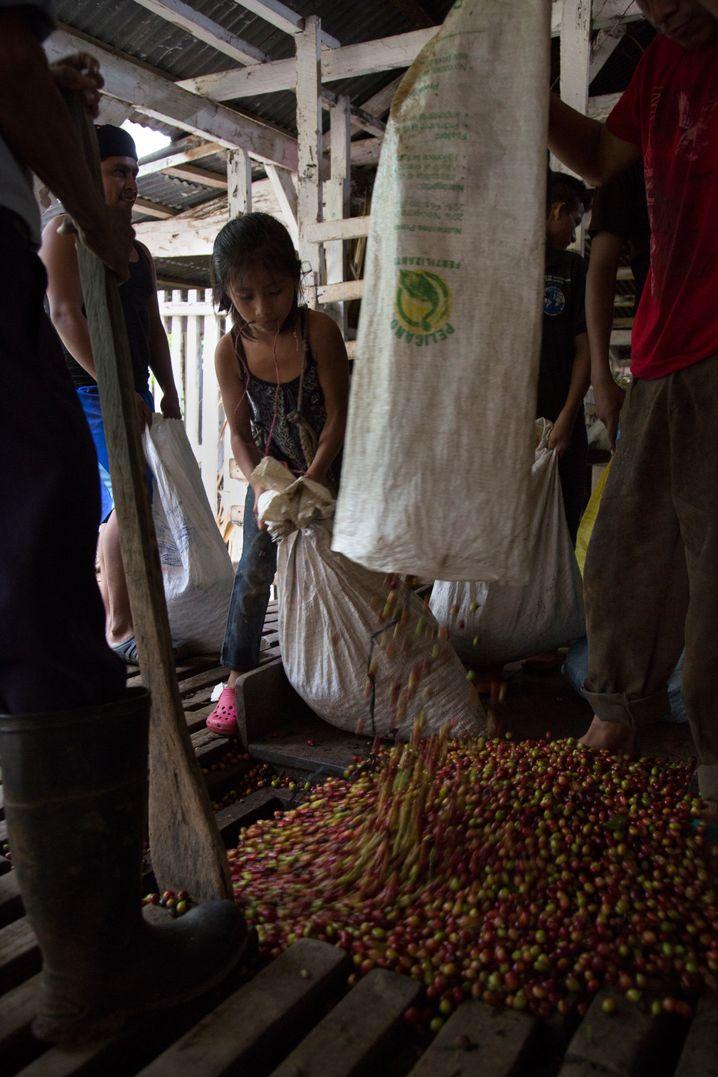 Plantagenarbeiter in Guatemala