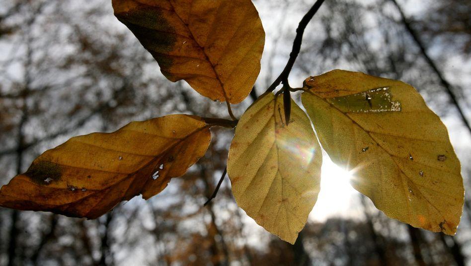 Herbstwetter: Das fur den Menschen so wichtige Licht dringt in der dunklen Jahreszeit kaum durch