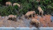 Wilde Elefantenherde nimmt Kurs auf Millionenstadt