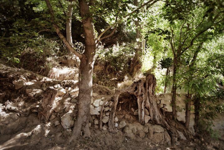 Der Ort, der als Vorlage diente - hier ist immer noch der Baumstrunk zu sehen