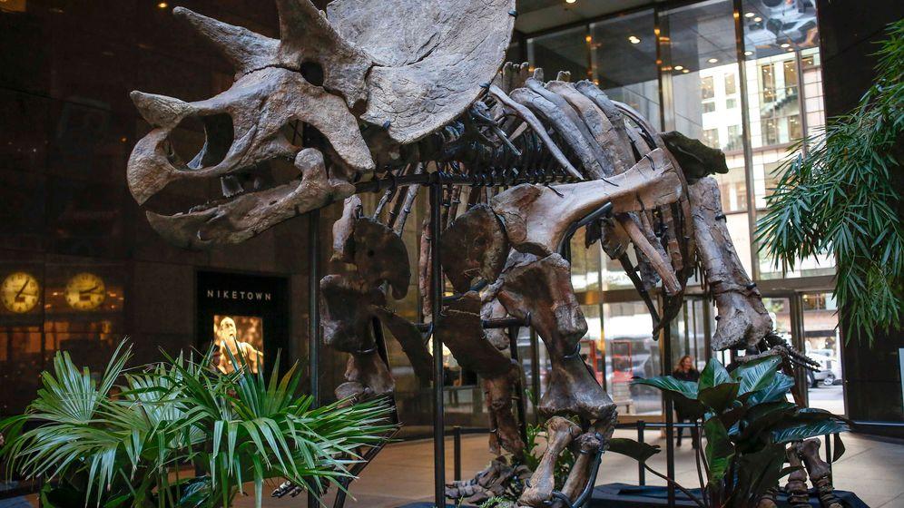 Spektakuläre Dino-Auktion: Experten erwarten Rekordpreis