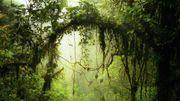 Das Millionengeschäft mit den Klimabäumen