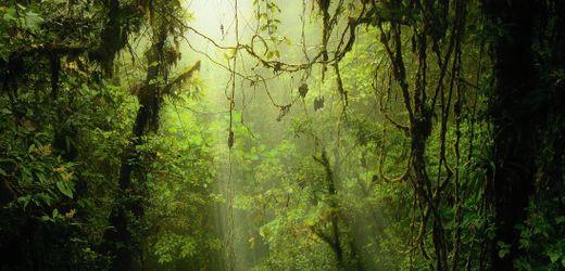 Klima: Das Millionengeschäft mit den Baumpflanzungen