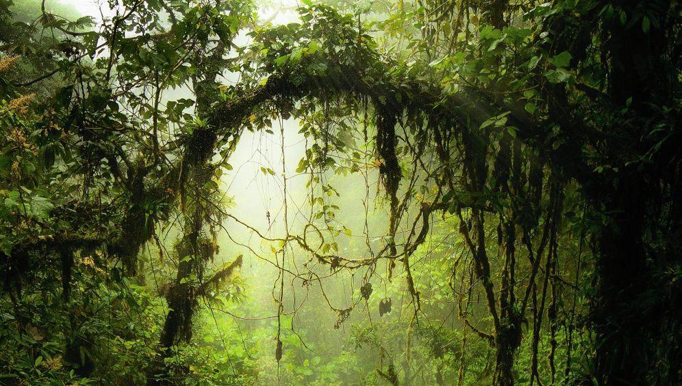 Nebelwald in Costa Rica