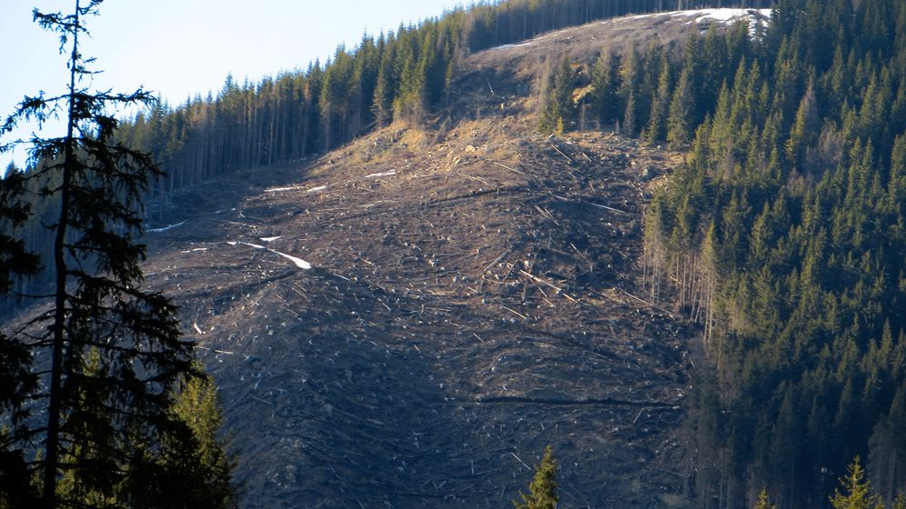 Photo Gallery: Logging Threatens One of Europe's Last Virgin Forests