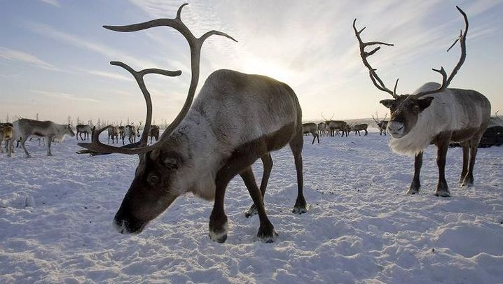 Photo Gallery: The Players in the Arctic Monopoly