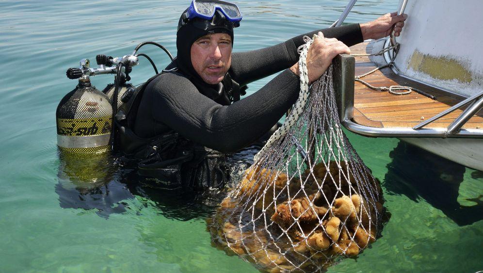 Insel Krapanj in Kroatien: Schwamm drüber