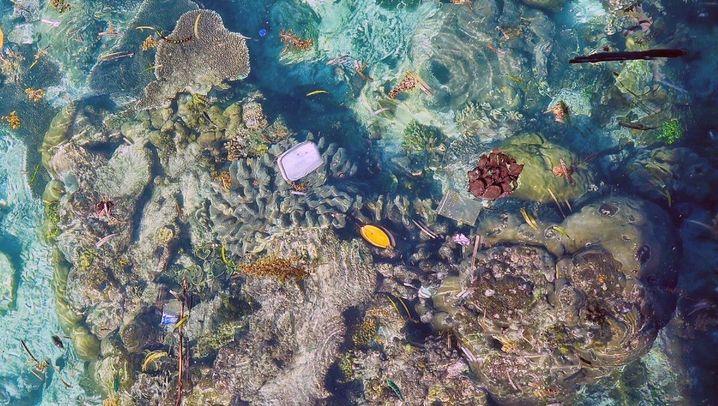 Vermüllte Riffe: Dreck im Paradies