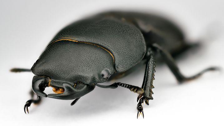 Heimische Insekten: Das große Krabbeln