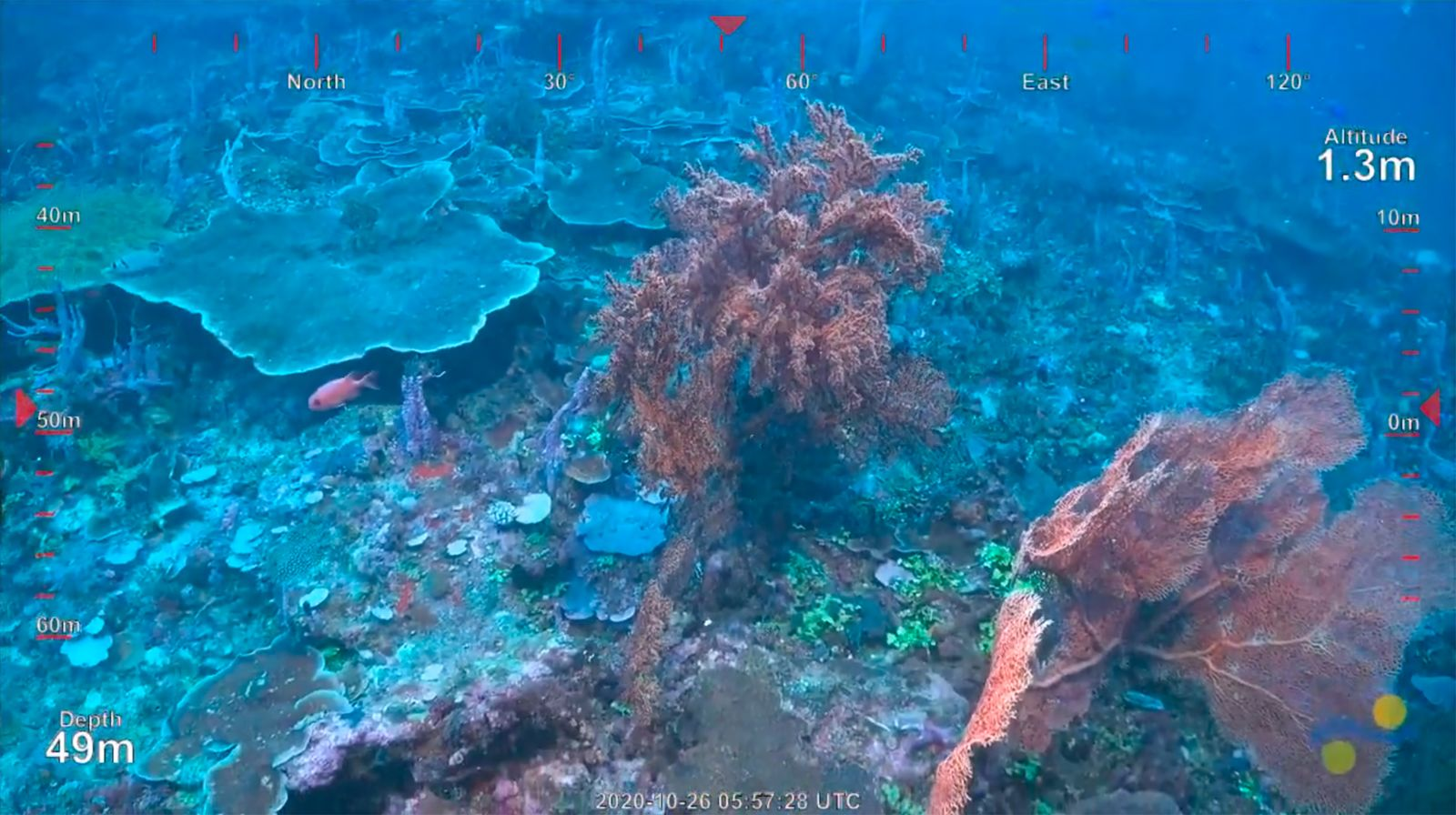 ROV Dive 401 - Newly Discovered 500m Tall Reef