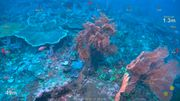 Wissenschaftler entdecken bisher unbekanntes Korallenriff