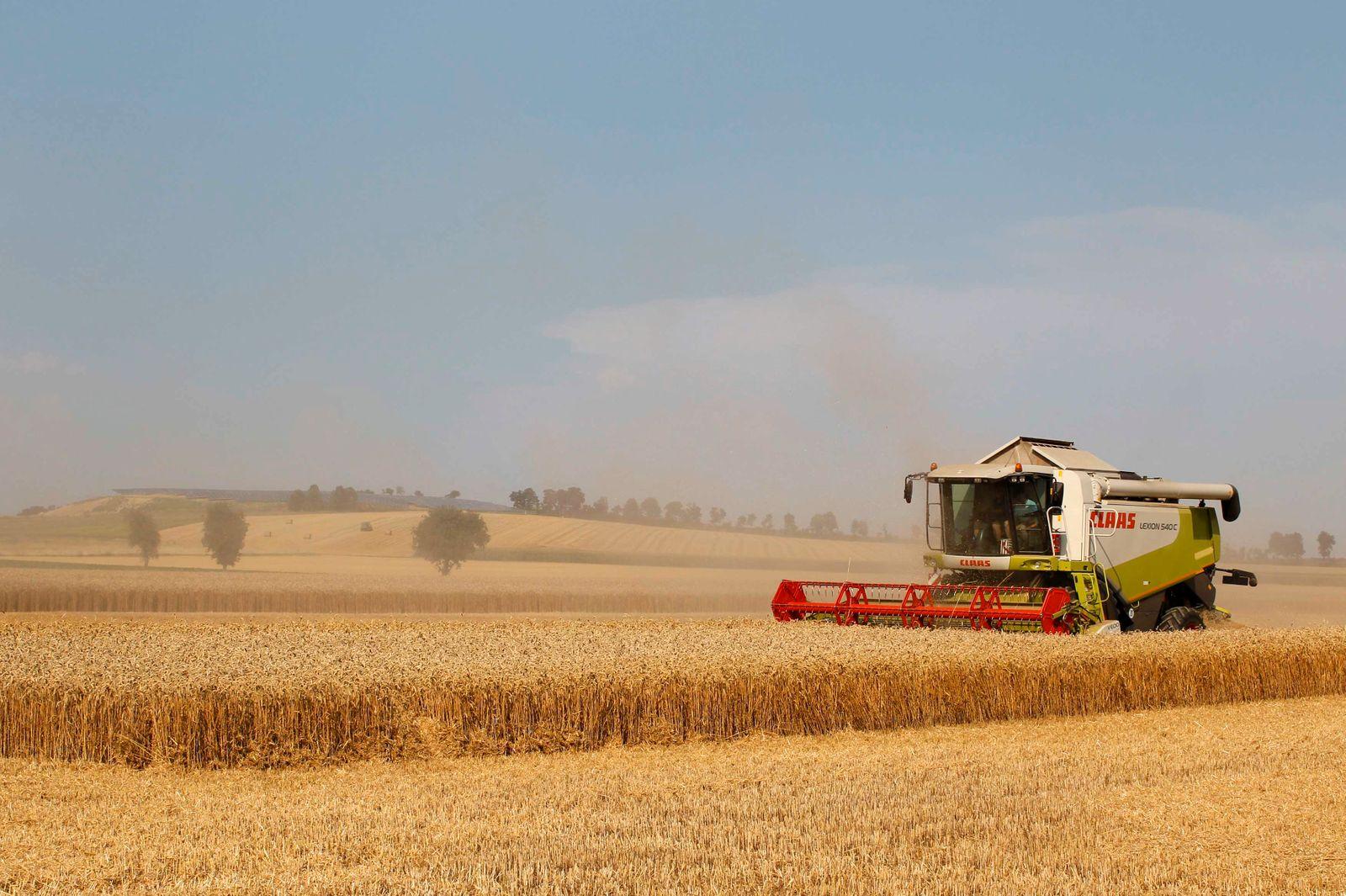 Combine harvester reaps winter wheat at field in Koesching near Ingolstadt