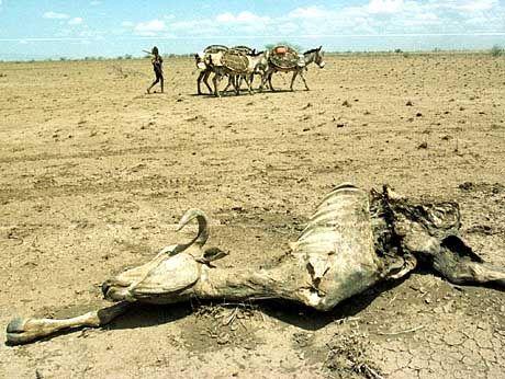 "Dürre in Kenia: ""Potenziell katastrophale Erwärmung"""