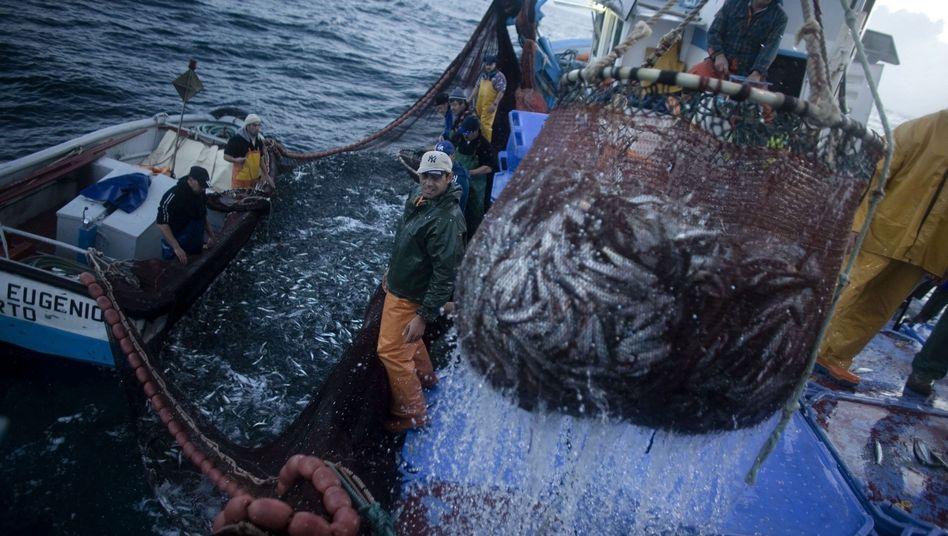 Fischer bei der Arbeit: EU droht Island und Färöer-Inseln
